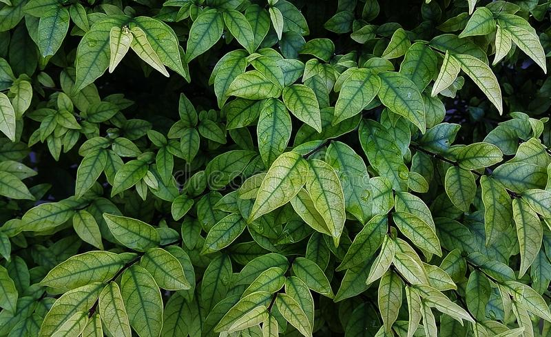Vele bladerenachtergrond dichtbij muur stock fotografie