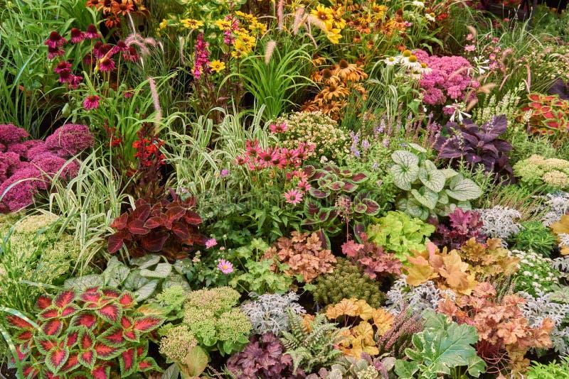 Vele bloemen en installaties stock afbeeldingen
