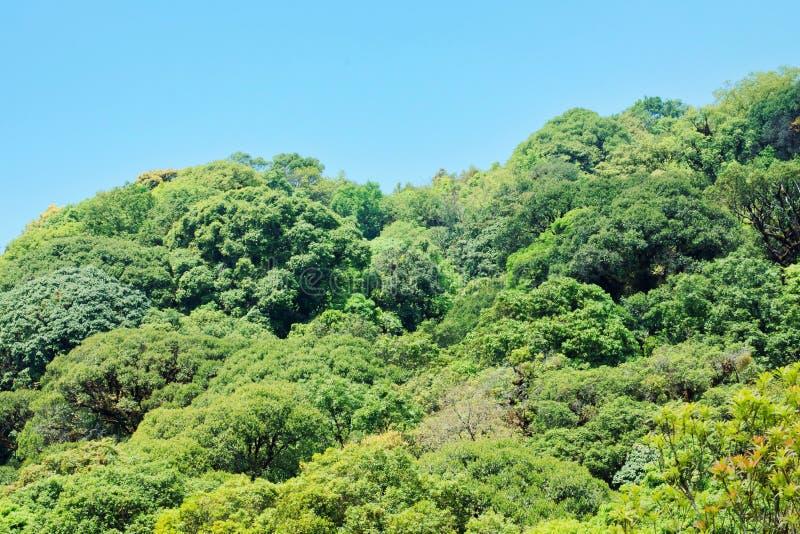 Vele boom op berg in Thailand Tropisch regenwoud met blauwe hemel Mooi van Wildernis in Zuidoost-Azië royalty-vrije stock foto's