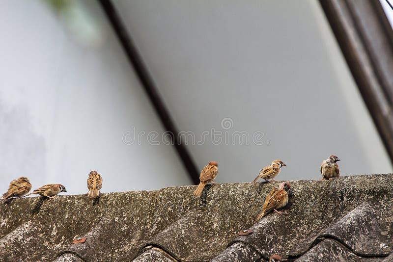 Vele die mussen op het dak worden neergestreken royalty-vrije stock foto's