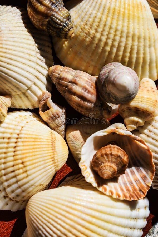 Vele die shells van het overzees wordt verzameld geheugen op de kust Elementen van oceaan en overzees stock afbeelding