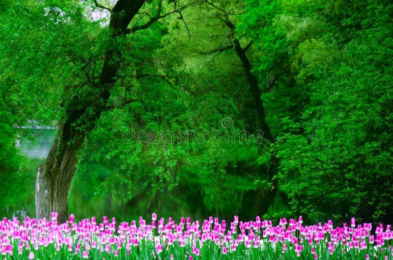 Vele die tulpen door kleur in een oud Park op een achtergrond van een bos en een vijver worden geplant stock foto