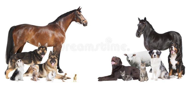 Vele dierencollage royalty-vrije stock afbeelding