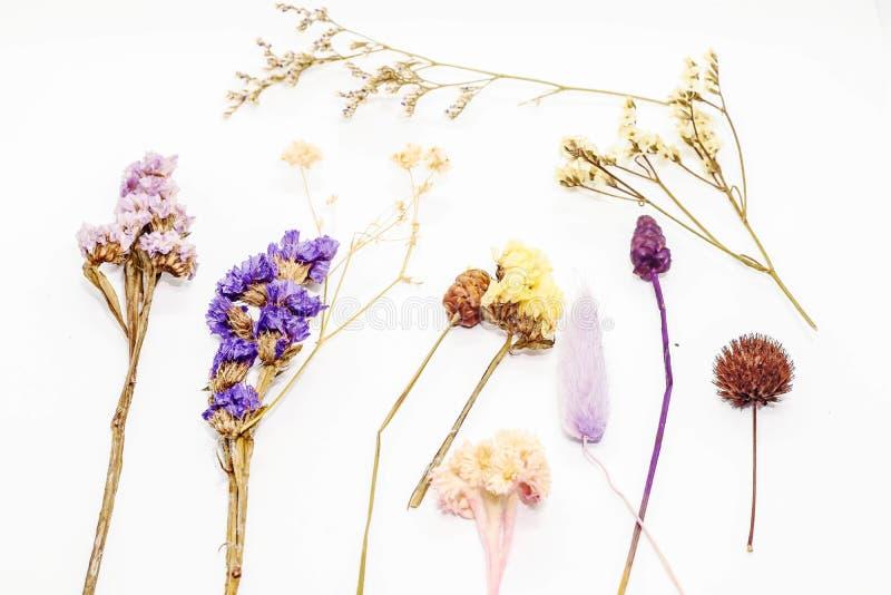 Vele droge die bloemen op witte achtergrond worden geïsoleerd stock foto's