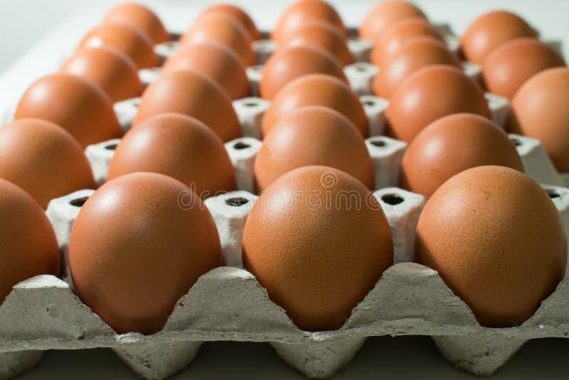 Vele eieren zijn in het dienblad royalty-vrije stock fotografie