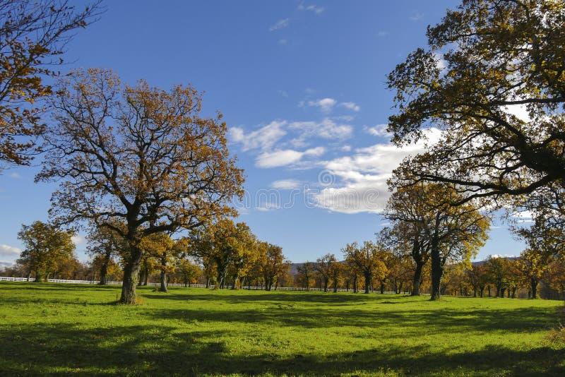 Vele eiken bomen in de zonnige dag royalty-vrije stock afbeeldingen