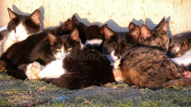 Vele en katten die rusten slapen stock foto