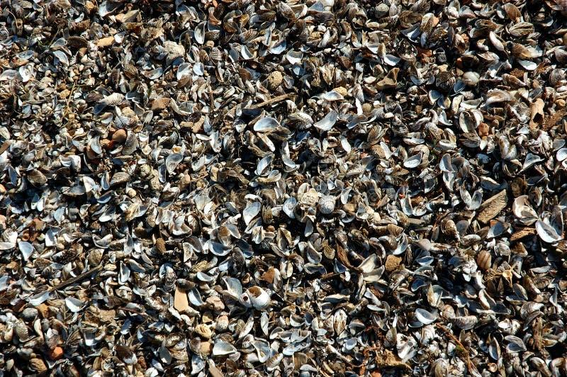 Vele gebroken shells stapelen zich omhoog op strandzand op stock foto's