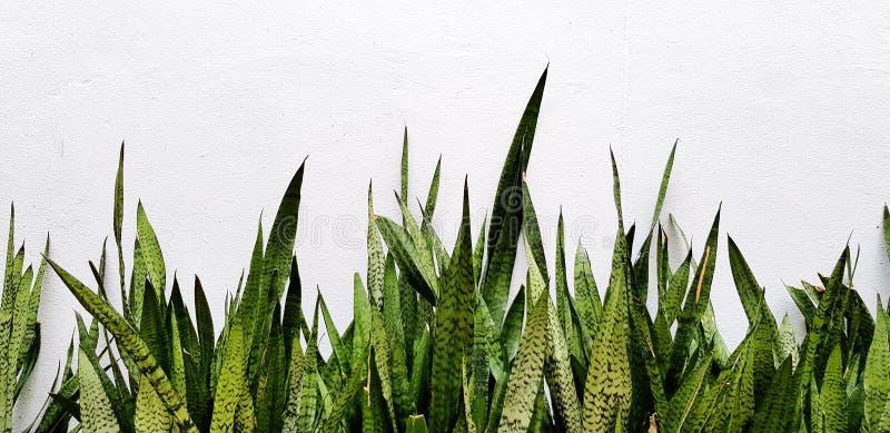 Vele groene die bladeren met exemplaarruimte op witte concrete muur wordt geïsoleerd royalty-vrije stock afbeelding
