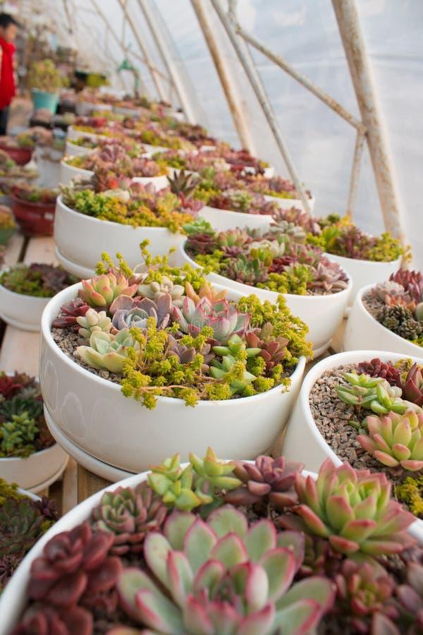 Vele ingemaakte succulents royalty-vrije stock foto's