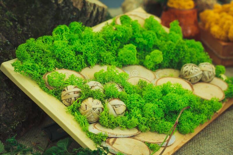 Vele kleine succulents stock foto's