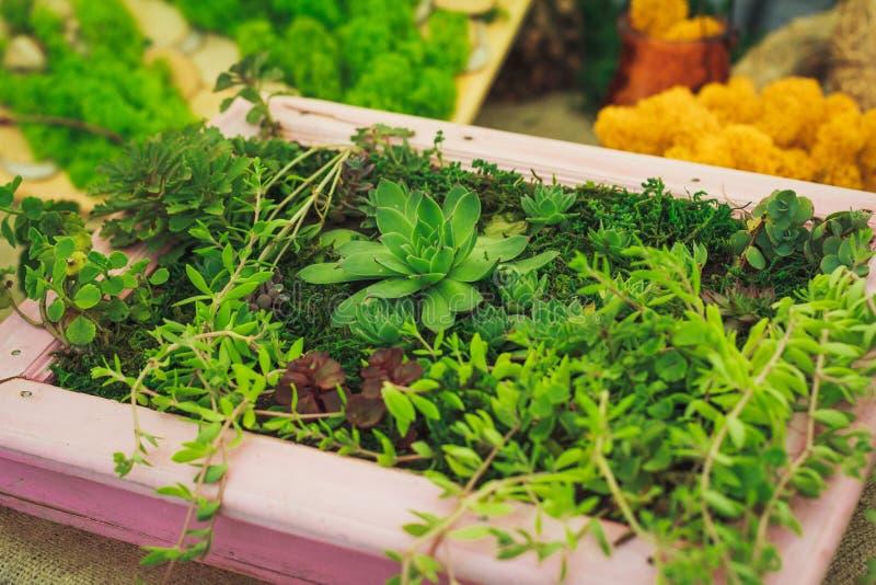 Vele kleine succulents stock fotografie