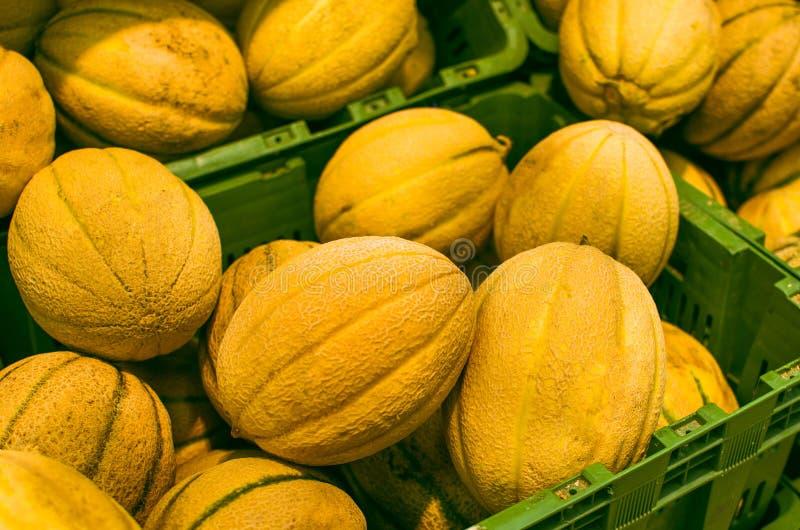 Vele meloenen (kantaloep) royalty-vrije stock afbeelding