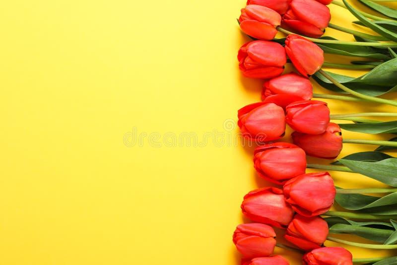 Vele mooie rode tulpen met groene bladeren op gele achtergrond royalty-vrije stock fotografie