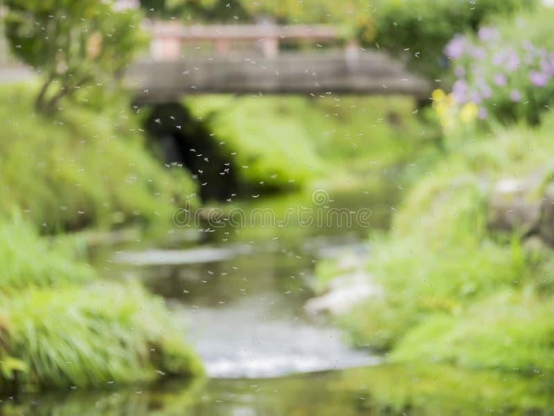 Vele mug die op het gebied met hieronder rivier vliegen royalty-vrije stock foto's