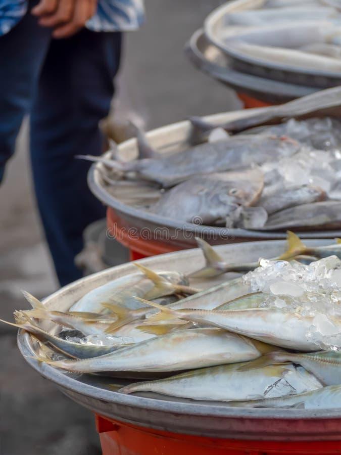 Vele overzeese vissen die op het dienblad worden geplaatst royalty-vrije stock foto's