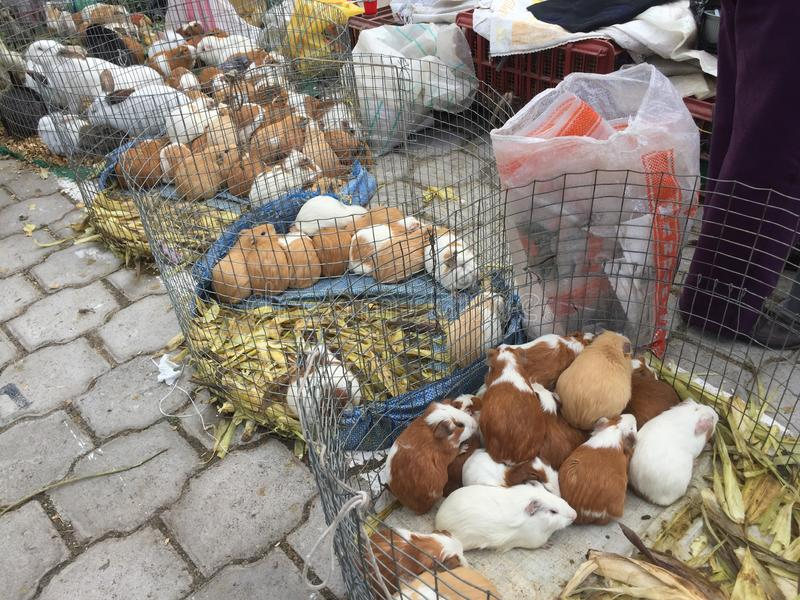 Vele Proefkonijnen en konijnen voor verkoop bij de markt in otavalo royalty-vrije stock afbeeldingen