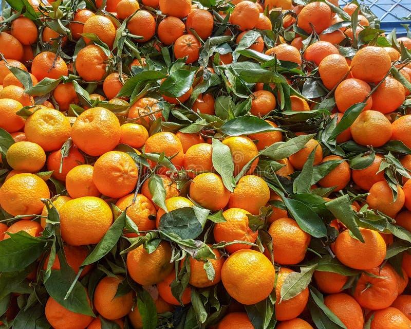Vele rijpe mandarijnen met bladeren als achtergrond, hoogste mening - Beeld royalty-vrije stock foto