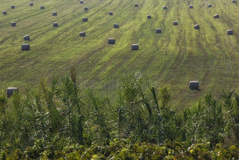 Vele ronde die balen van hooi vers op een gebied worden geoogst royalty-vrije stock foto