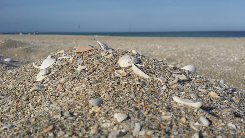 Vele Shells op het Tropische Strand royalty-vrije stock fotografie