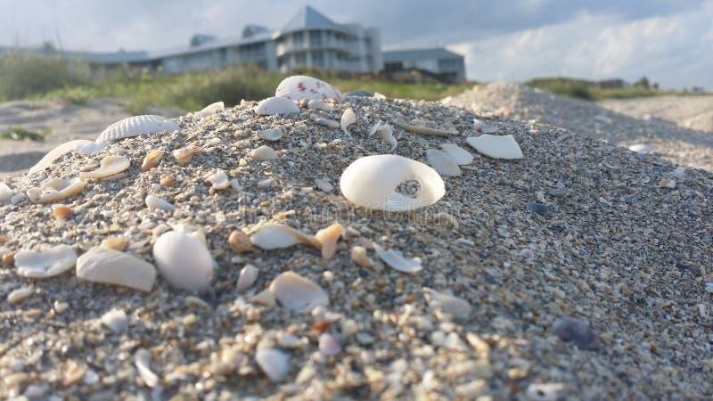 Vele Shells op het Tropische Strand stock afbeeldingen