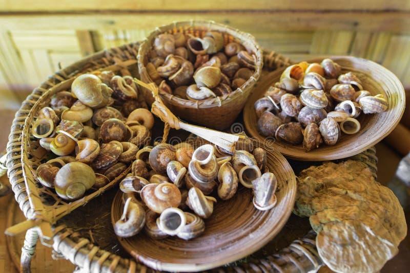 Vele slakkenshell in de bamboemand royalty-vrije stock foto's