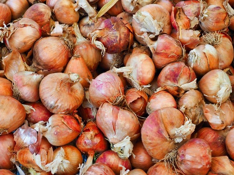 Vele Spaanse Uien voor Verkoop bij Fruit en Plantaardige Markt stock fotografie