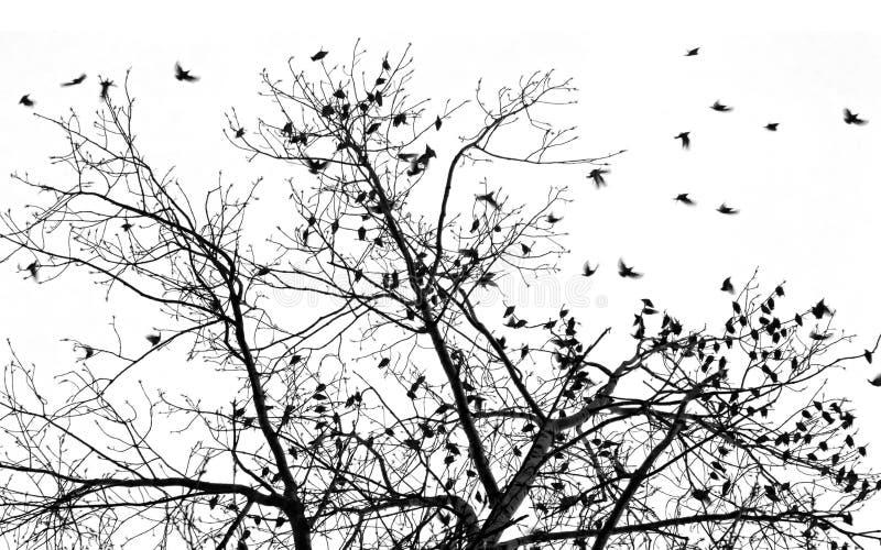 Vele starlings stock fotografie