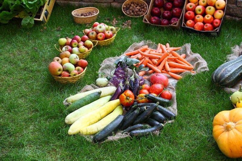 Vele verschillende gezonde groenten in tuin op gras stock for Groenten tuin