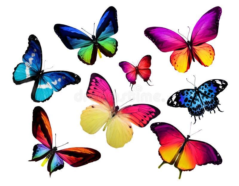 Vele verschillende vlinders stock afbeeldingen