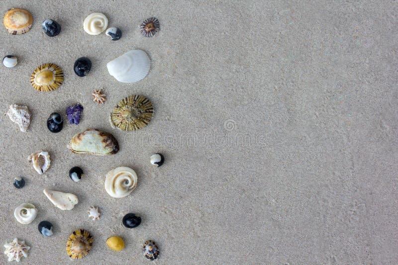Vele verschillende zeeschelpen van Tasman-overzees op zandachtergrond royalty-vrije stock afbeelding