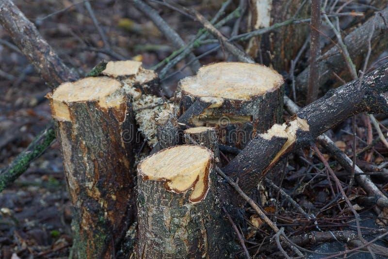 Vele verse stompen van gesneden bomen in de tuin royalty-vrije stock fotografie