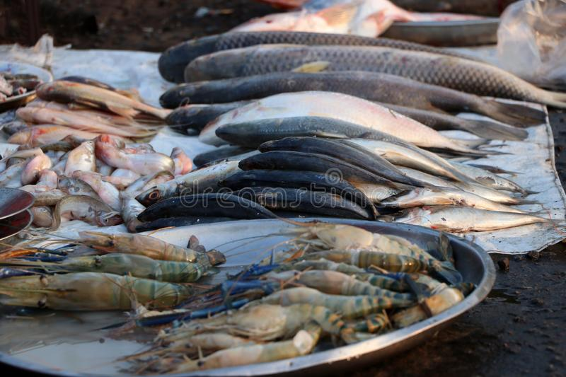 Vele vissen met het bedekken door de doek en het aluminium om dienblad op de vloer voor verkoop in de markt royalty-vrije stock foto