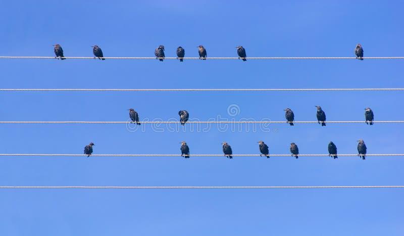 Vele vogels die bij draden zitten royalty-vrije stock afbeeldingen