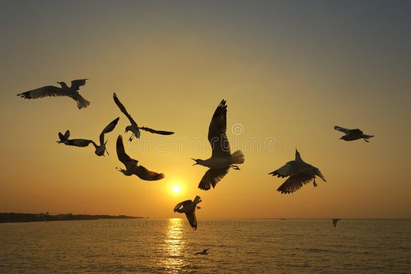 Vele zeemeeuw die bij zonsondergang vliegen stock afbeelding