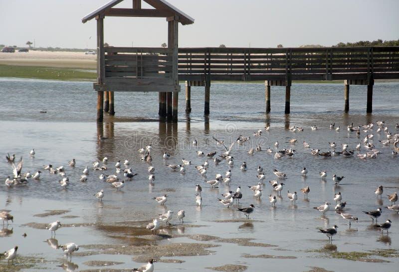 Vele zeemeeuwen bij kust op houten brug royalty-vrije stock afbeelding