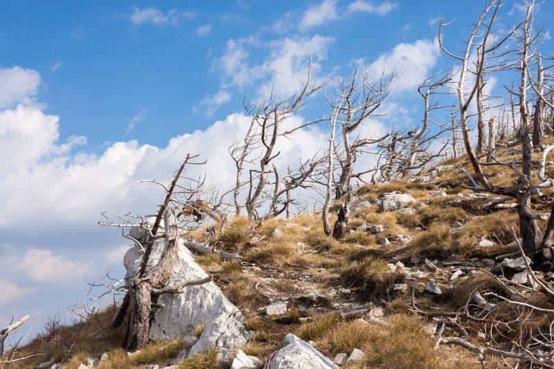 Velebit, Croatie images libres de droits