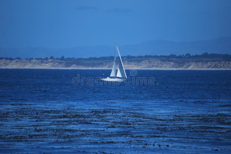 Veleiro na baía de Monterey imagem de stock royalty free
