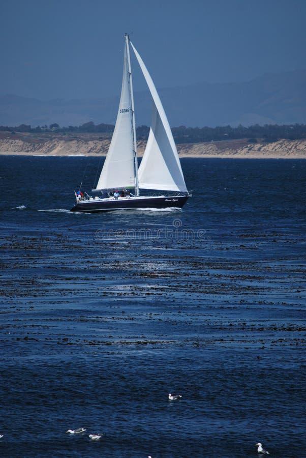 Veleiro na baía de Monterey fotos de stock