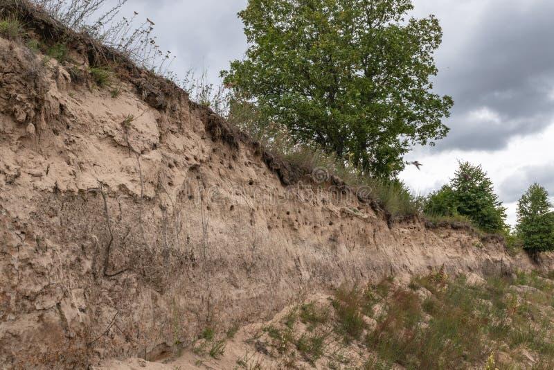 Velen slikken nesten in een steile helling op de rivierbank Kalugagebied, Rusland royalty-vrije stock foto