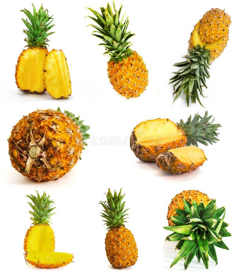 Velen verschillende ananas op witte achtergrond Geheel en besnoeiing royalty-vrije stock afbeelding