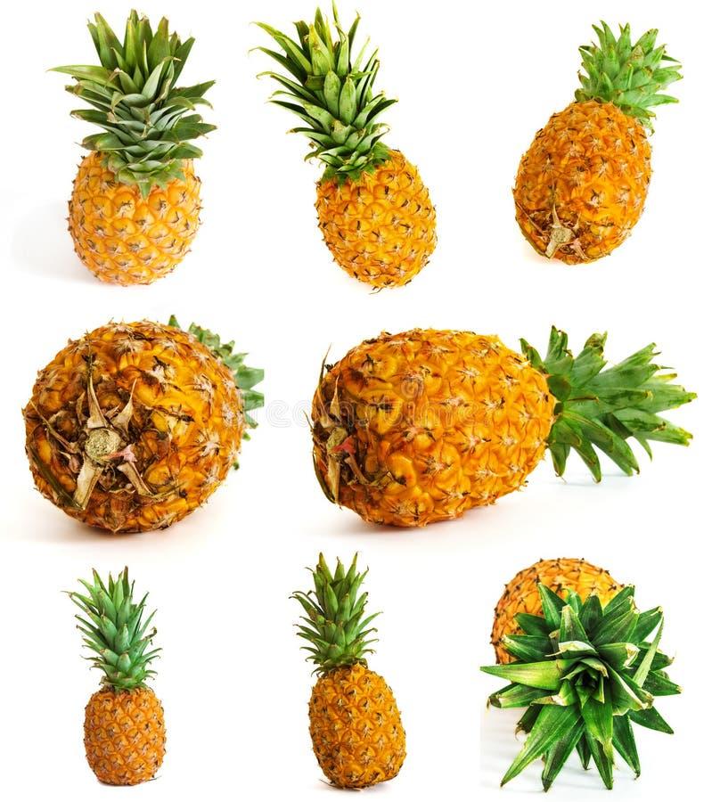 Velen verschillende ananas op witte achtergrond Geheel en besnoeiing stock foto's