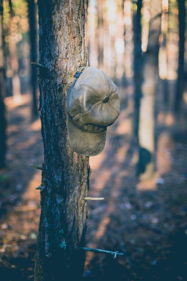Velho chapéu no ramo na floresta do pinho fotos de stock