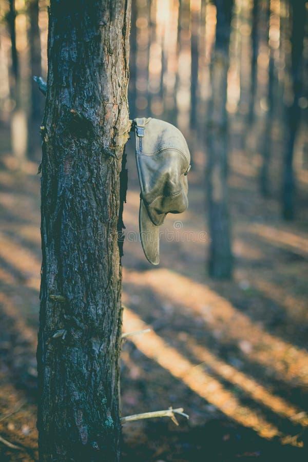 Velho chapéu no ramo na floresta do pinho fotografia de stock royalty free