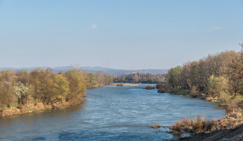 Velika Morava - Rivier Grote Morava in Servië met bomen en gras op de kust stock foto's