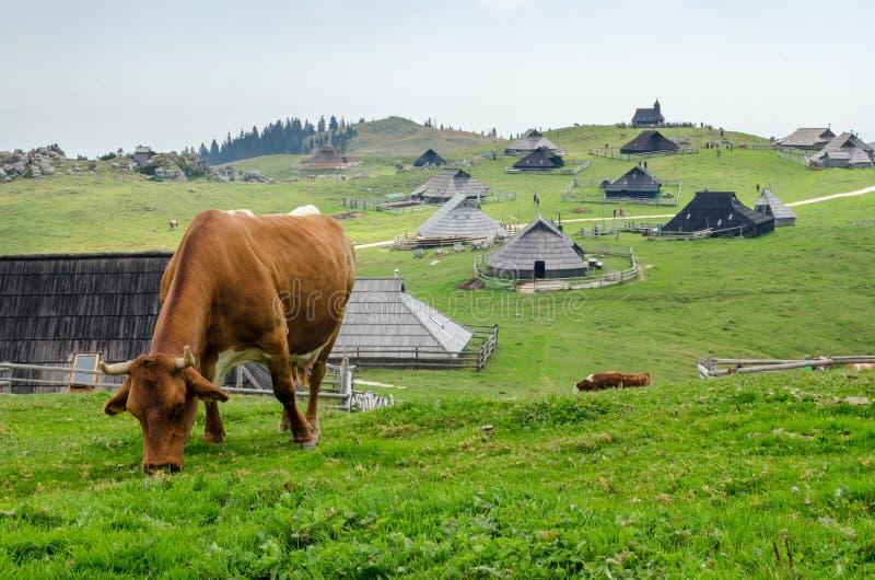 Velika Planina, Slovenië stock foto's