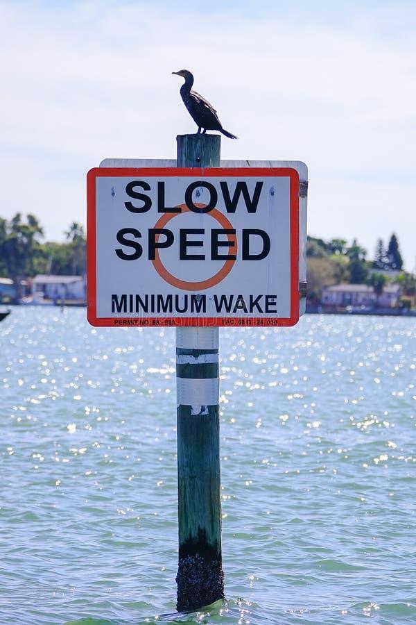 A velocidade lenta assina dentro Tampa Bay fotos de stock royalty free