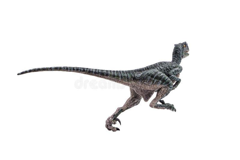 Velociraptor, δεινόσαυρος στο άσπρο υπόβαθρο στοκ φωτογραφίες με δικαίωμα ελεύθερης χρήσης