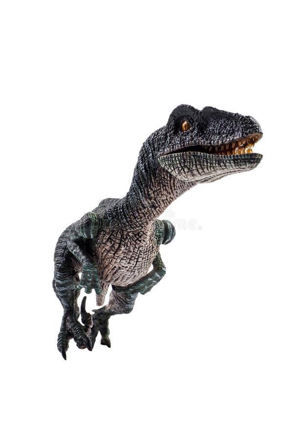 Velociraptor, δεινόσαυρος στο άσπρο υπόβαθρο στοκ εικόνες