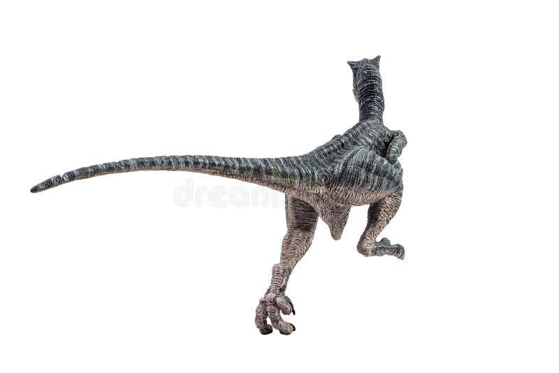 Velociraptor, δεινόσαυρος στο άσπρο υπόβαθρο στοκ φωτογραφία